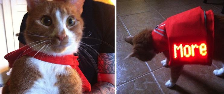 IF-cat-vest